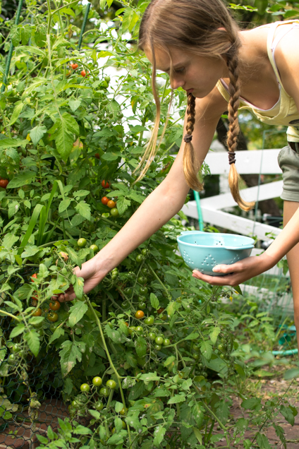 flo tomaten-1500-3