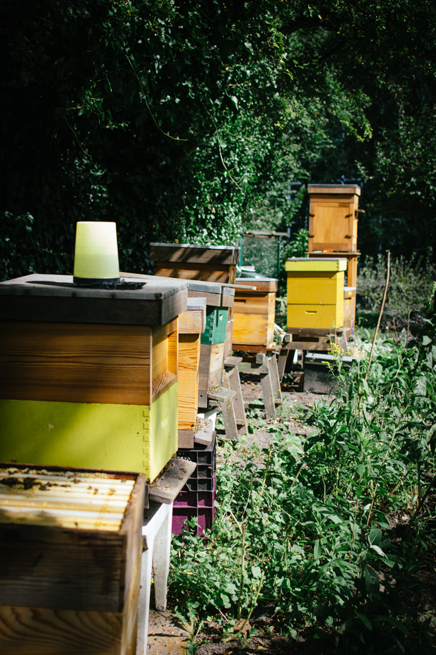 haagse honing hives-6501