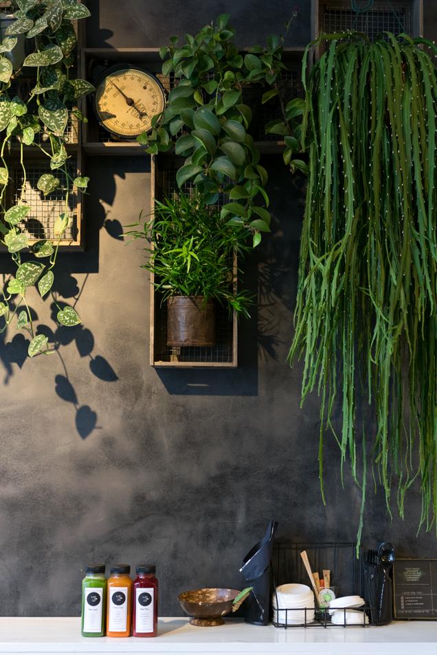 saplab planten-9189